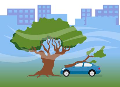 Ветер дунул, дерево упало: кто ответит за ущерб машине